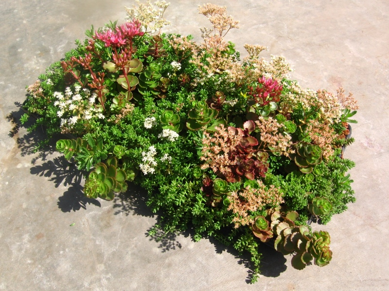 All-Season-Early-Fall- for Green Roof