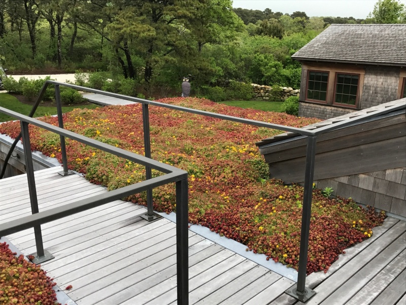 IMG_9444Green Roof