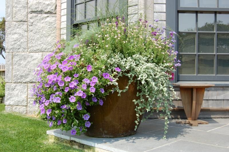Kumpitch-planter-two-photo-6