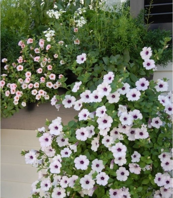 Softscape Planters